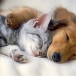 puppykittensleeptogether